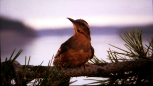 The_Twin_Peaks_Bird_by_pinkythepink